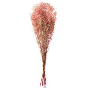 Mazzo Gypsophila Secche Rosa 10x5x84